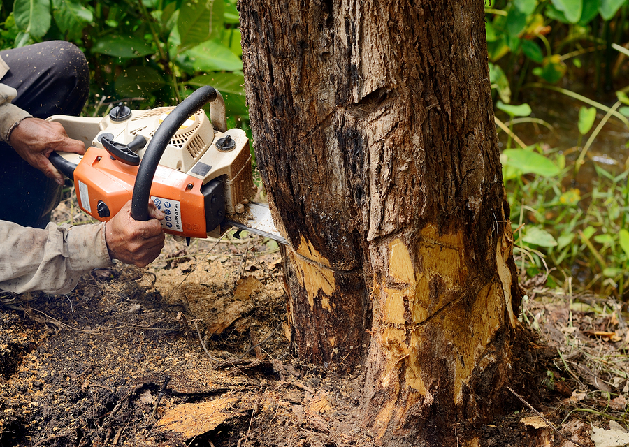 Liverpool Tree Surgeons Services Rates
