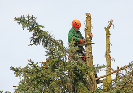 Emergency Tree Services Liverpool