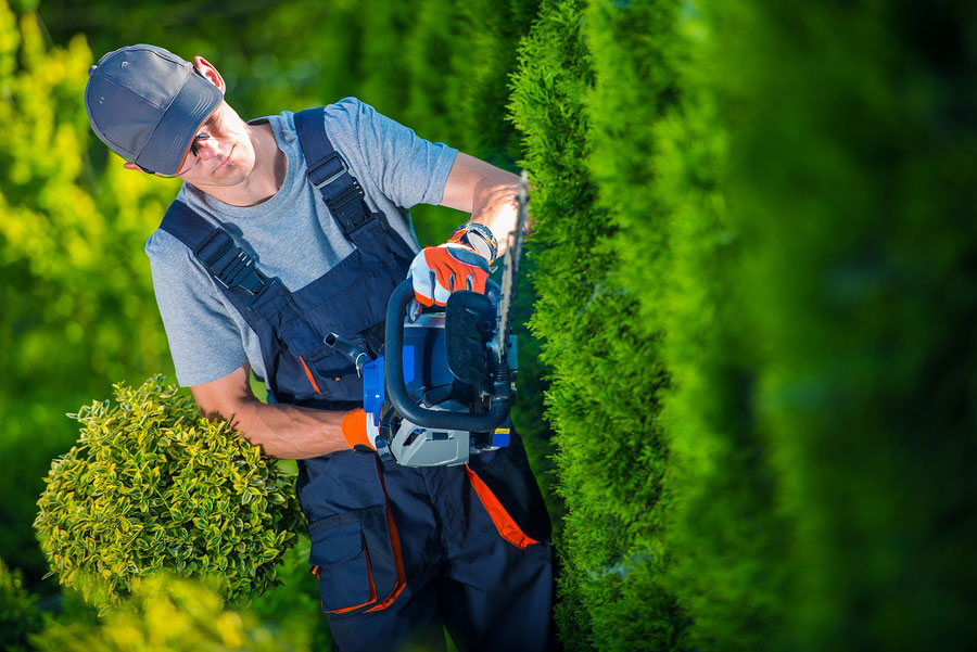 Liverpool tree surgeon prices